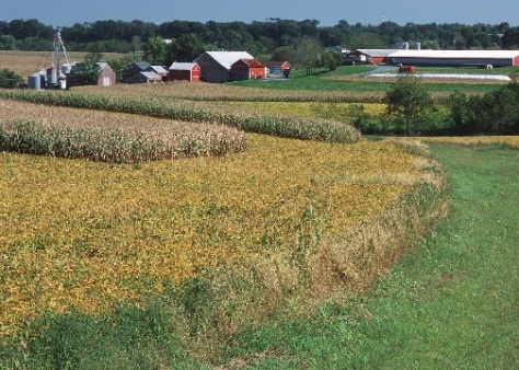 Cover crops on farm, barns in back ground
